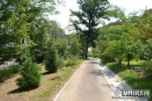 Parcul dendrologic Dr. Ioan Vlad din zona Valea Popii din Alba Iulia 50