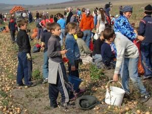 Copii-exploatati-munca-agricultura-16